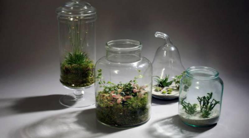 Napravi svoj minijaturni vrt u staklenoj posudi  Dobre vijesti