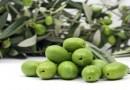 Ekstra djevičansko maslinovo ulje pomaže u očuvanju pamćenja i prevenciji Alzheimerove bolesti